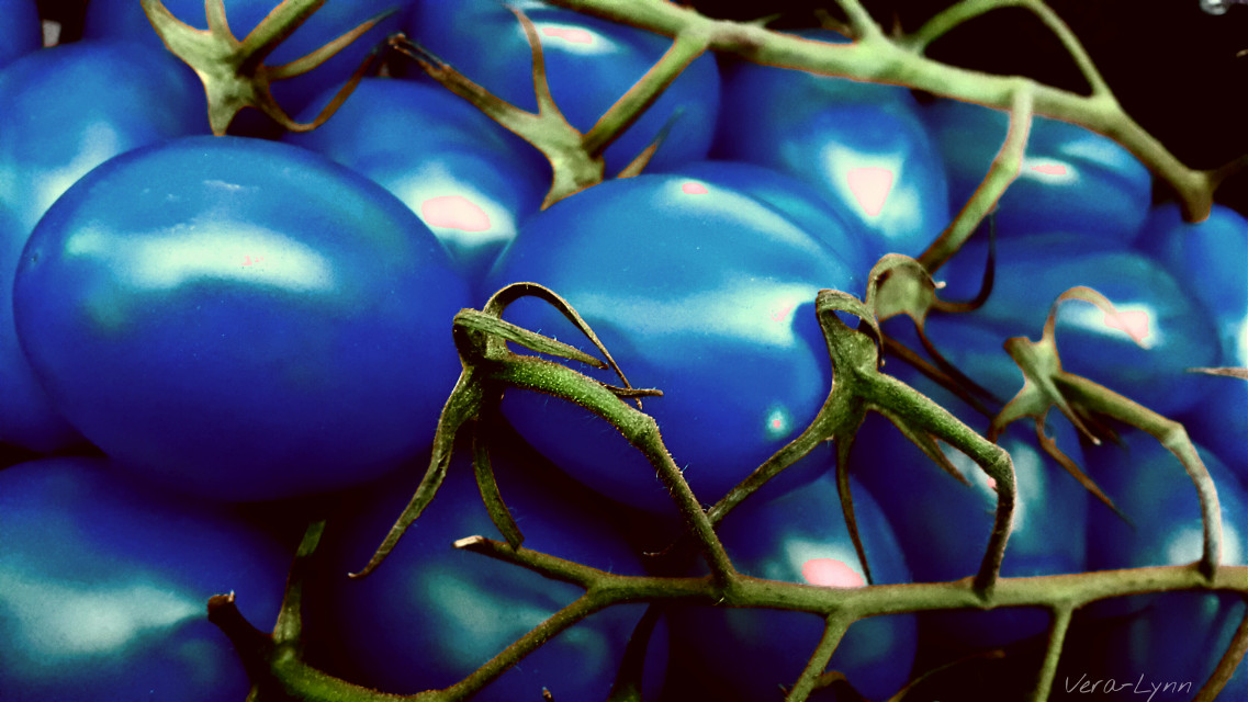 #colorswap #blue #tomato #fruit #food #photography #close-up #color
