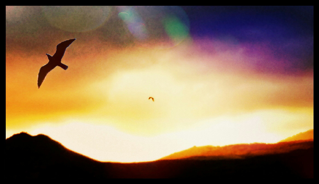 What a wonderful world #blackandwhite #emotions #colorful #nature #petsandanimals #photography #summer #summer #sicilia #sicily #Mountain #sunset #landscape #bird