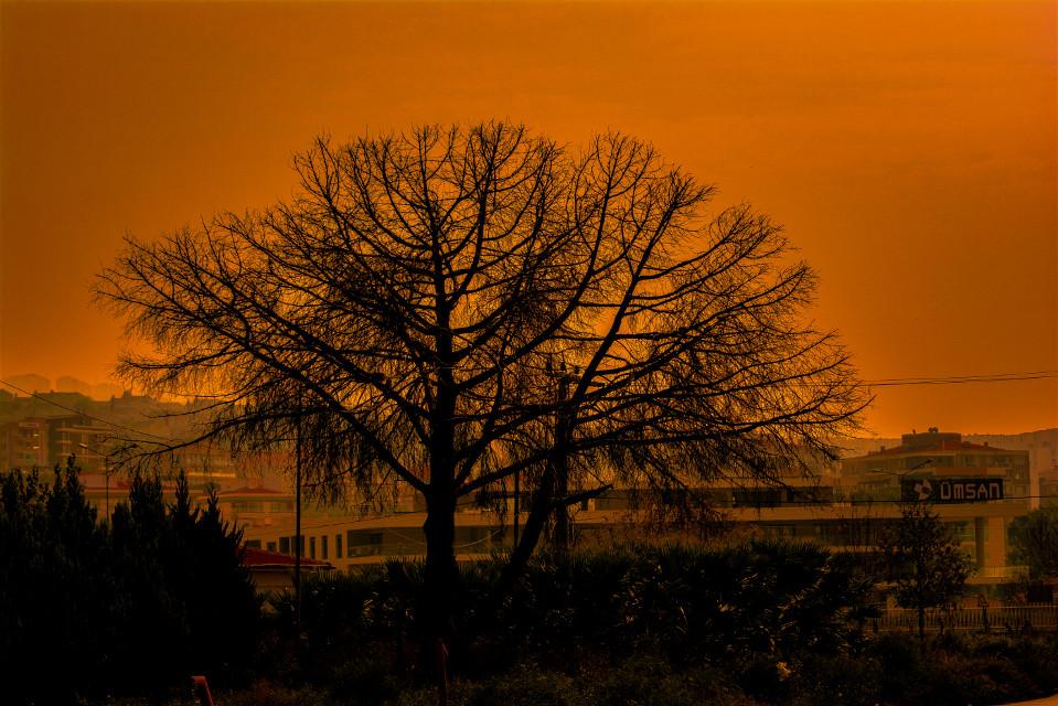 #SunsetSilhouette #sunset #günbatımı #photography #model #travel #cute #tree #trees #autumn #nature #cute