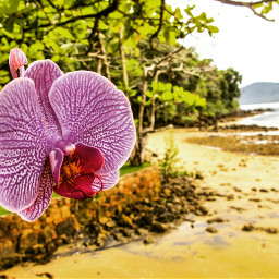 orquídeas orchids nature beach water