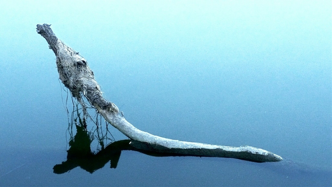 This branch caught my eye at the park today. The water was like glass.💙