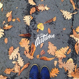 autumn fall mood leaves