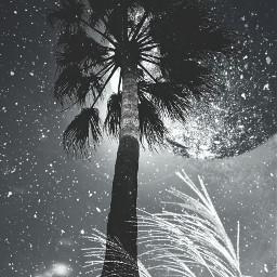 Night blackandwhite photography popart
