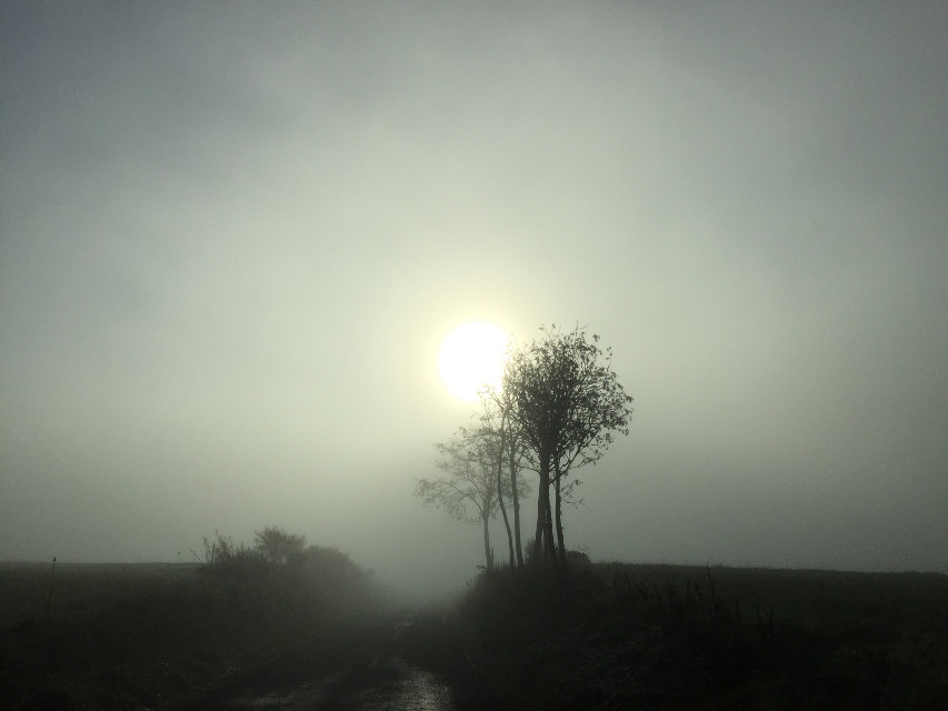 Have a nice day my friends #nature #morningsun #fog #freetoedit #noeffect