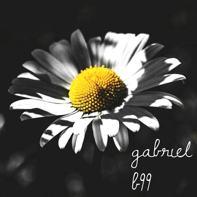 Girasol  #b99 #photography #colorsplash #emotions love flowers  #FreeToEdit