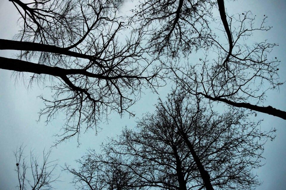 #Tree #autumn