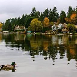 morning lake seattle autumn fall