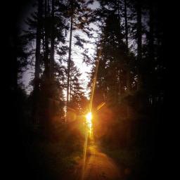 wppnaturallight