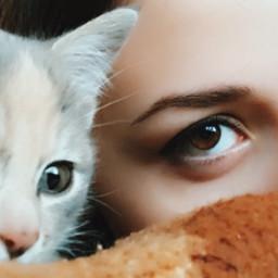 cat kitten pets cute love