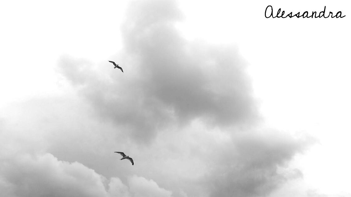 GoOood morning.. afternoon.. evening.. night my friends #photography #blackandwhite #sky #cloud #bird #simplething  #minimalism