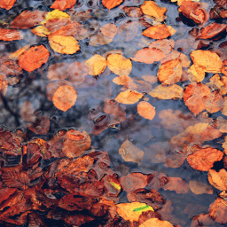 wppfallcolors autumn nature outdoors photography