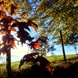autumn colorfulleaves bluesky countryliving