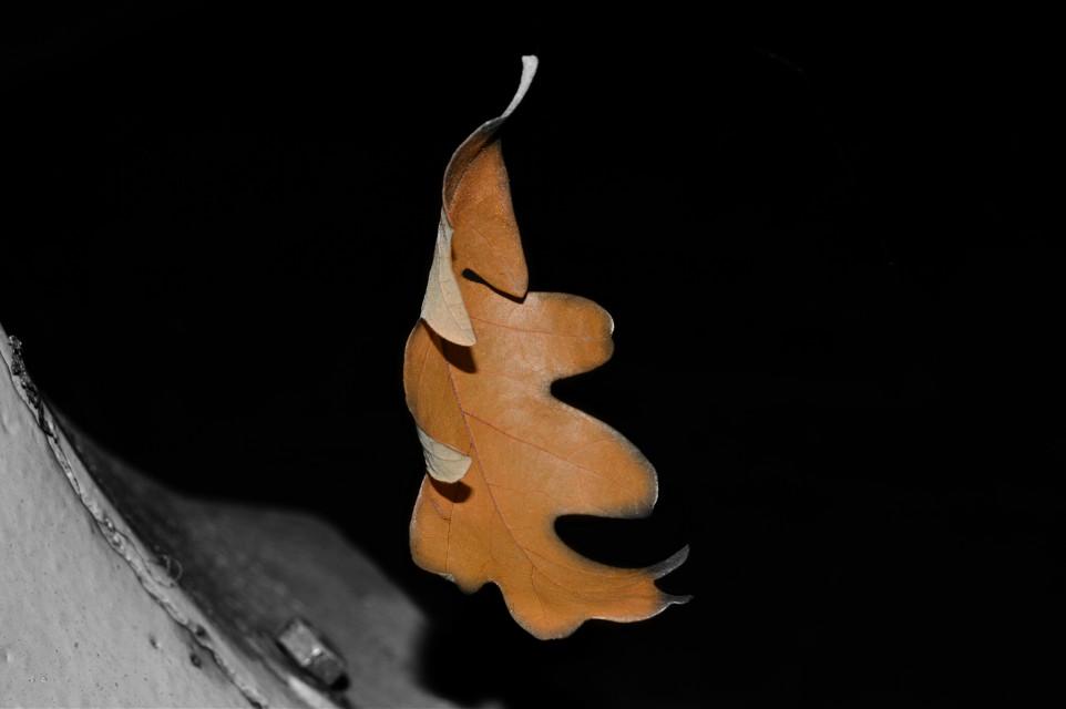 The Floating Leaf. #colorsplash #nature #photography #takenbyme #Nikon