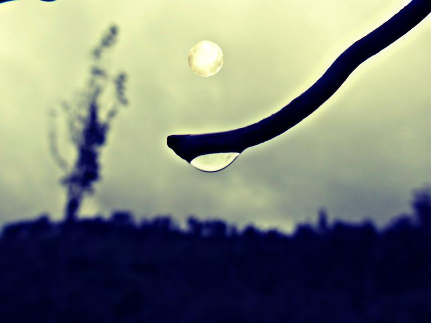 Moon#branch#water drops