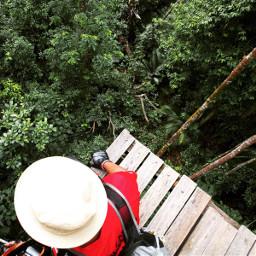nature naturephotography malaysia summer jungle
