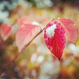 nature photography win winter bokeh