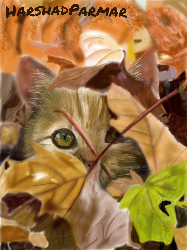 #wdpautumn#petsandanimals #autumn leaves#hope u all like it my friends. Thanx in advance for ur likes, votes & reposts if any.