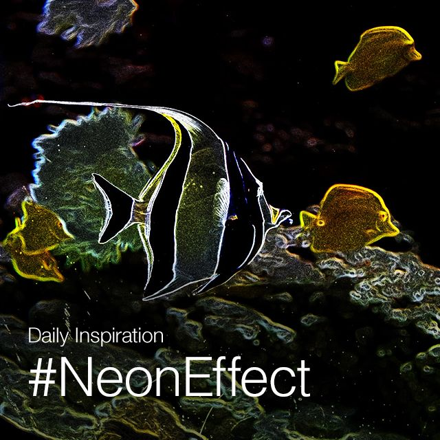 neon effect photo editing