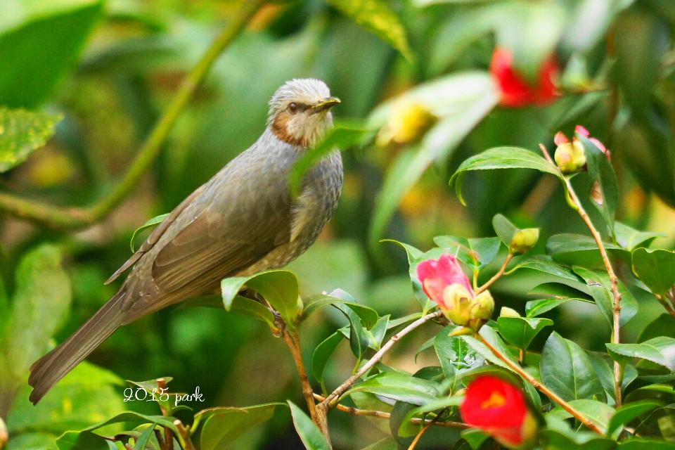 #nature #flower # bird  #photograph  💕