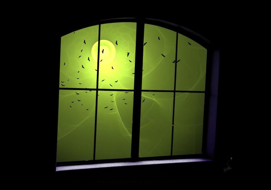 MyWindow.     #viewfrommywindow #surreal #window #birds #wapautumnvibes