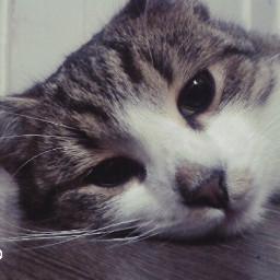 cat cute eyes mycat sweet