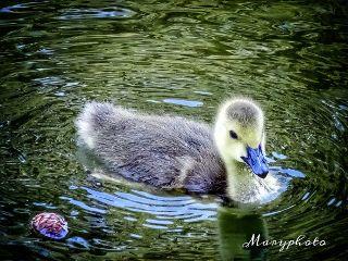 france animals bird naturephotography photography