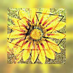 gliter yellow brown flower hdr