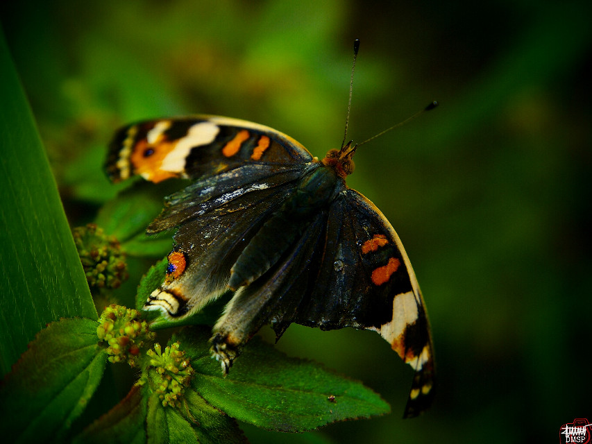""""""" Ready to fly """"  #butterfly #nature  #photography"""