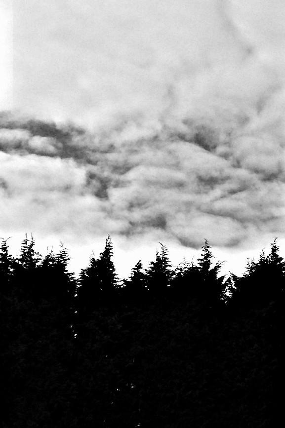 #trees #blackandwhite #photography #stilllifevisuals