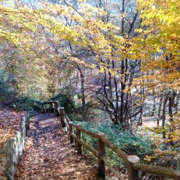 travel nature iran amol autumn