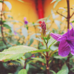 photography nature flower cute love