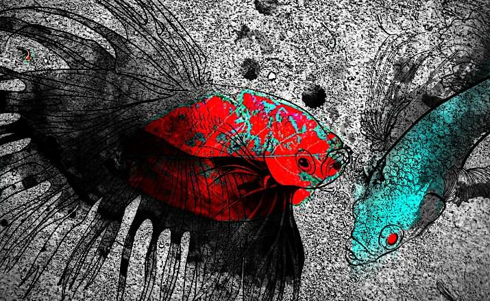 FIGHT #SIAMESEFIGHTER #petsandanimals #betta #colorsplash #nature #photography #ColorContrast #artwork  #MadeWithPicsArt