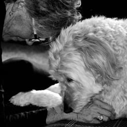 blackandwhite art interesting dog goldendoodle