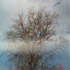 tree colorful film bluesky freetoedit