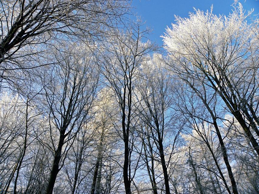 #trees #bluesky #winter #forrest #ice #snow