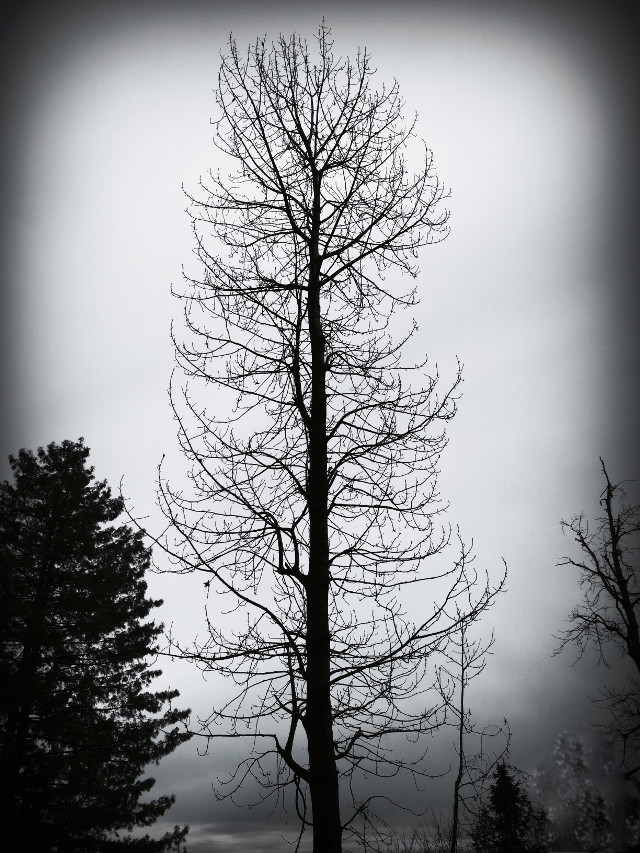 Standing #tall and #still  in this brazen, #cold #world .   #stillness #stilllife #nature #naturephotography #tree #winter #wintertree #travel #travelphotography #pakistan #pakistanmurree #murree #interesting #photography #worldtravelpics #unedited #uneditedpic #bnw #blackandwhite #black&white