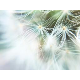 interesting nature plant