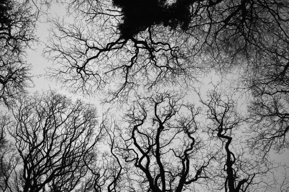 Wisdom is infinite    #trees #lookup #branches #photography #black&white #blackandwhite #textures