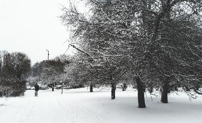 snow landscape finland winter park