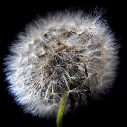 blackandwhite photography nature flower