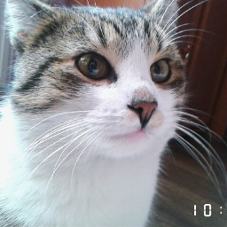 cat mycat polishcat cute kitty