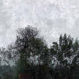 horse southafrica artwork travel trees