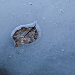 minimal frozen leaf pond ice