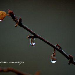 wppwaterdrops colorful nature photography rain