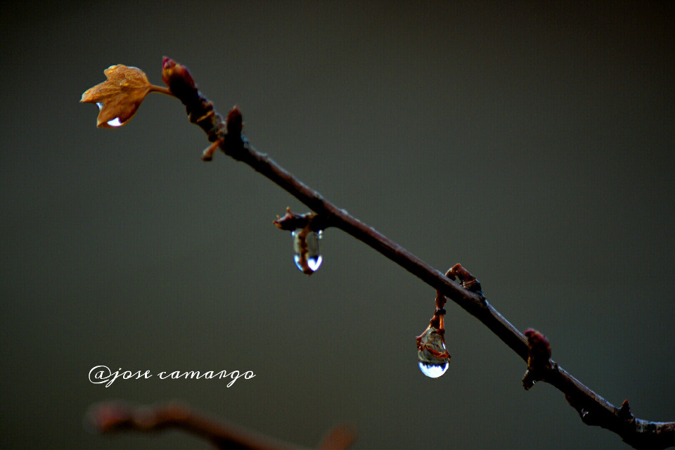 #wppwaterdrops #colorful #nature #photography #rain #love  #waterdrops #leaf #seasons #nikon