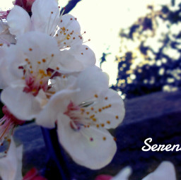 petaloso flower spring nature love