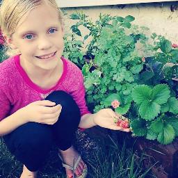 strawberry garden plants inspiretheyouth