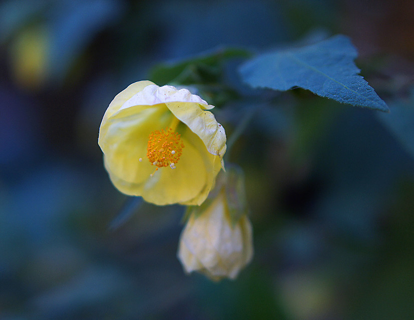 #flowers #filoligarden in raining
