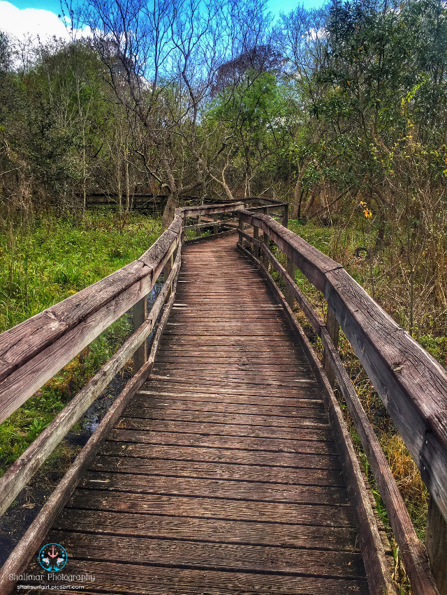 #deck #wood #woods #forrest #trees        #wild #nature #natureaddict #fl #lovefl #nikon #nikonistas  #macro #photography #nikond5200 #WorldNatureSociety #NikonNoFilter #nikonphotography