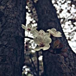 spring flower tree nature natural photography art interesting hdr freetoedit picsart